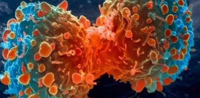 Yağlı besinler kanseri tetikliyor