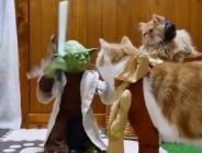 Kedilerin Yoda'yla imtihanı